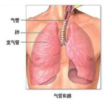 龋齿与肺炎
